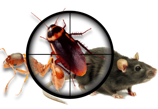 pest control west palm beach